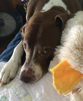 Mikie-Boy with favorite toy duck June 2020