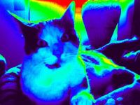 Pompom in the Thermal Camera!
