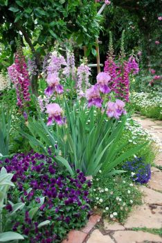Shades of purple - iris, foxglove, pansies