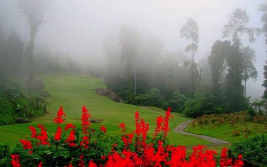 Red Flowers in the Mist