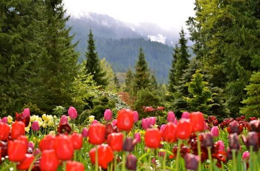 The color of spring British Columbia