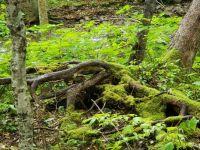cabot trail, nova scotia 4