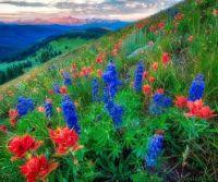 Vail Florals