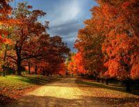 Autumn Leavs