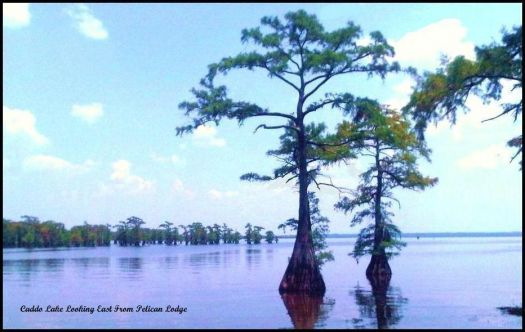 Caddo Lake from Pelican Lodge