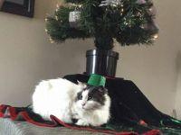 Oreo the Cat New Year's Eve