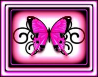 Pinknblack butterfly