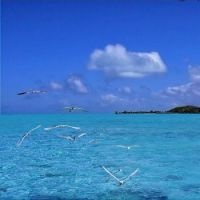 Sea Gulls in Bora Bora