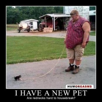 Little Kitt'eh Has aNew Pet