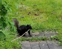 Twig thief