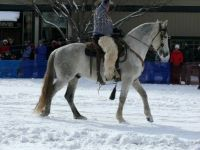 Winter Carnival Stallion