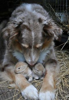 I'll protect you until your mommy gets home