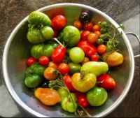 Tomato Medley - the last of this year's crop