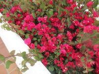 Pretty flowers in Tenerife