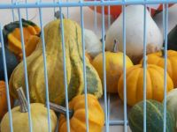 Caged gourds