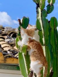 Cat in a cactus
