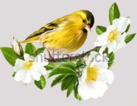 yellow-bird-on-branch-white-600w-274669802
