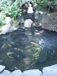 Koi Pond with Buddha
