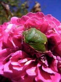 A Garden Visitor