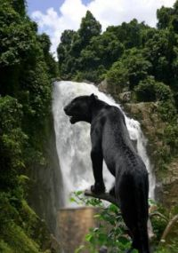 Black Beauty of the Rainforest. . .