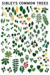 Sibleys Common Tree Leaf chart