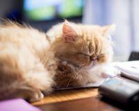 Sleepy Marvin