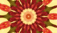011718 Kaleidoscope