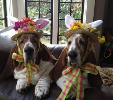 In our Easter Bonnets....