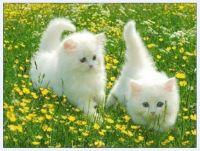 Koťata_Kittens