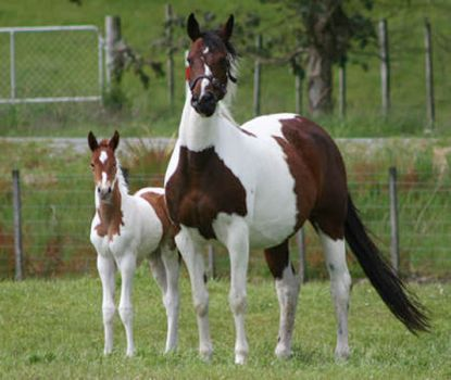 lovely mare and foal.