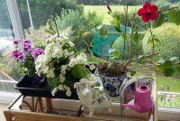 Mixture of plants.
