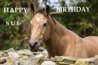 Happy Birthday, Sue (Sue1)