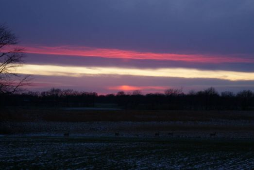 Sunset and Deer ~ February 1, 2013