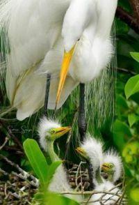 A Peek Into the Nest