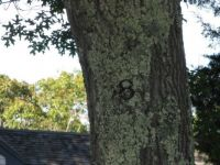 Tree with house number