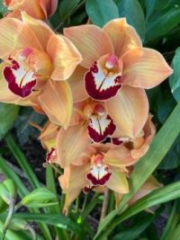 Orchid Show 2