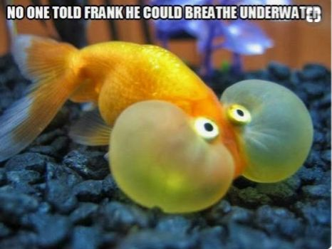 Oh Frank