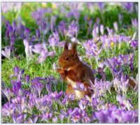 Na louce_On a meadow