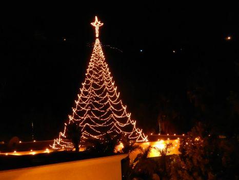 My Christmas Light-tree