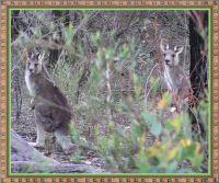 A couple of Aussie friends.