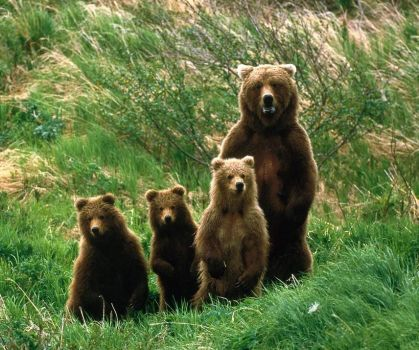 "BROWN BEAR ""MOM N KIDS"""