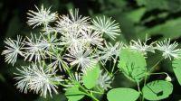 woodland wild flowers