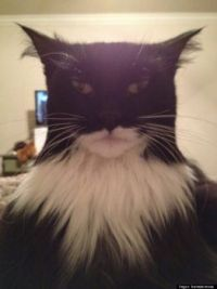 Is this cat's real name Bruce Wayne?