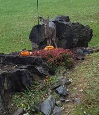Pumpkin Soup for the Deer