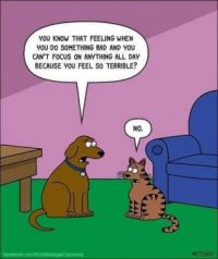 One difference between dogs and cats