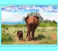 orphan baby elephant with adult orphan Emily