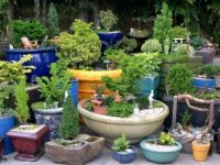 Garden with Pots-