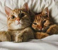 Theme - cats