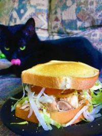 Rotisserie chicken, Colby jack, lettuce, tomato and sour cream on buttered sourdough - pictured with jealous cat