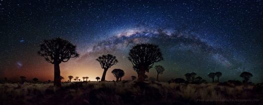 Milky Way over Quiver Tree Forest
